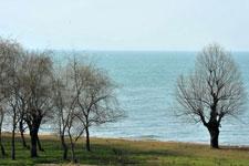 初春巢湖湿地美