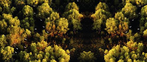 巢湖生态湿地