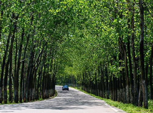 巢湖林荫绿道