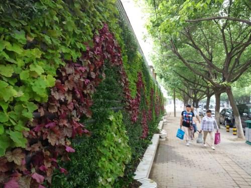 围墙变花墙 立体绿化扮靓环城河畔